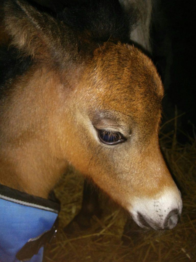 Foals, TyBees Velvetbucks May B Baybelline